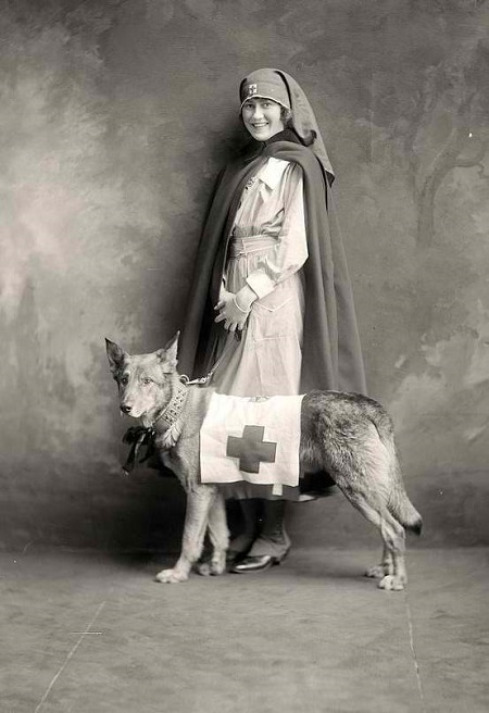 WWI nurse posing with a dog, circa 1914-1918.