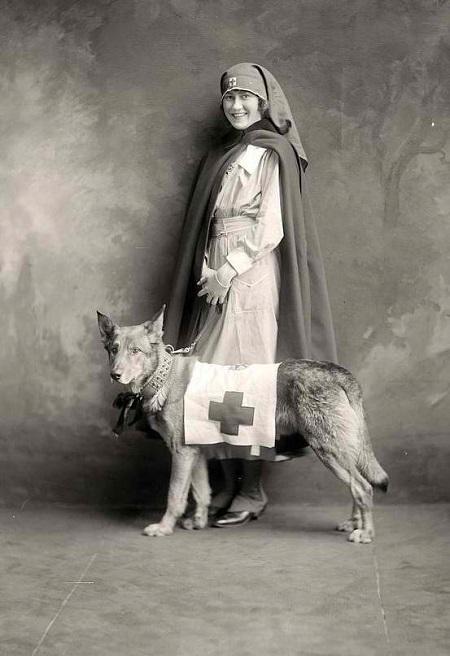 WWI nurse posing with a dog, circa 1914-1918.