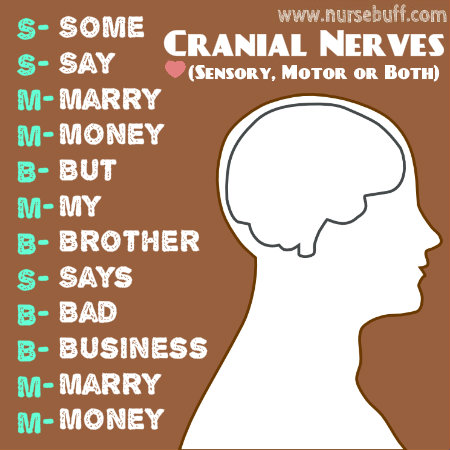 12 cranial nerves ( warning dirty mnemonics) Flashcards