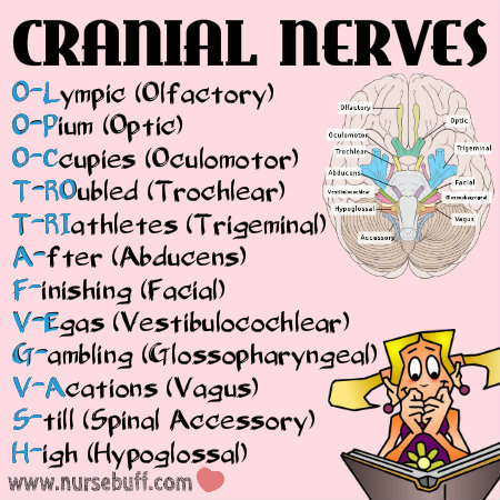 cranial nerves nursing mnemonics