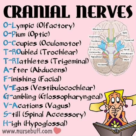 cranial-nerves-nursing-mnemonics