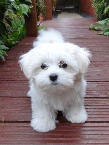 11 best dog breeds for nurses who 39 ve always wanted pet dogs nursebuff. Black Bedroom Furniture Sets. Home Design Ideas
