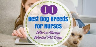 dogs for nurses