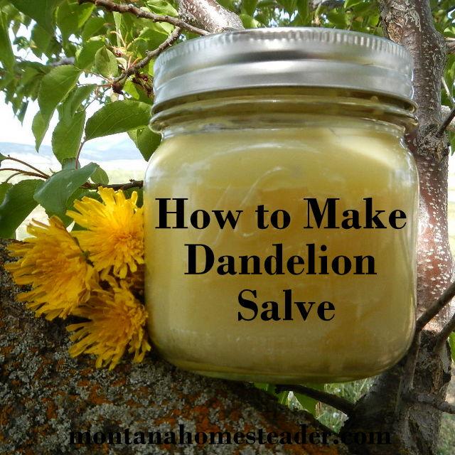 dandelion salve