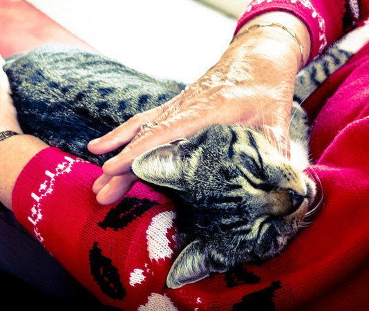 benefits of pet therapy