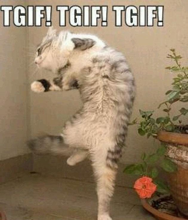 cat dancing tgif friday memes