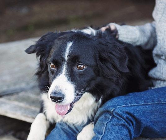 esa dog certification