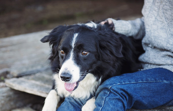 how to train your dog to be an emotional support animal - How Would Your Rate Yourself As A Team Playerleader Or Anything Else