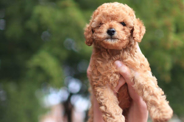 Best Dog Breed For Emotional Therapy
