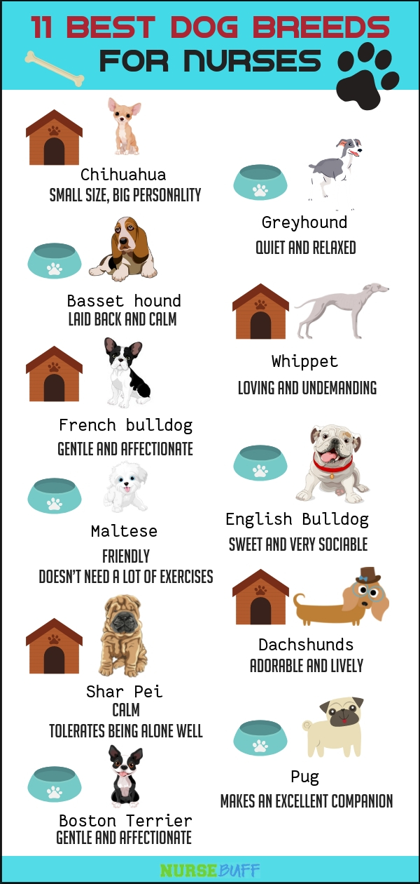 dogs for nurses infographic