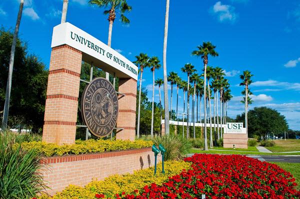 university of south florida